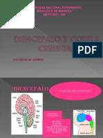 Diencefalo y Corteza Cerebral