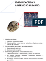 3 SistemaNervioso.doc