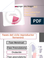 Fases del ciclo reproductor.pptx