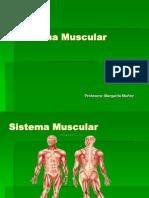 sistema muscular (2)2012.ppt