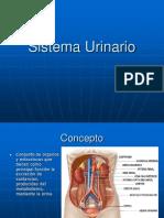 Sistema Urinario2