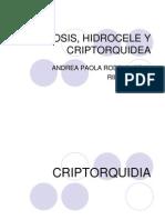 Fimosis, Hidrocele y Criptorquidea