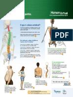 Anatomia da Coluna Vertebral.pdf