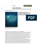 Ameaça na Floresta Submersa
