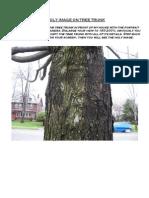 Image on Tree