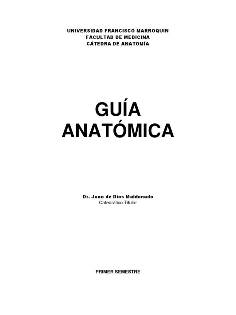 guia anatomica 1er semestre.pdf