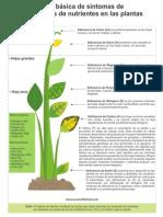 Tabla+Deficiencia+en+Plantas+PDF