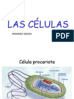 Cc3a9lulas Organelos Ppt Completa
