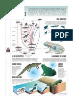 Lamina - Anfibios y Reptiles