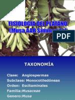 Fisiologia Del Platano