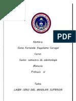 Anatomia Macroscopica de Las Estructuras Limitantes