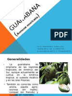 GUANABANA EXPOSICION