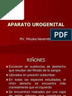 Aparato Urogenital de Los Animales