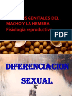 1Fisiología reproductiva
