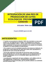 Copia de PROYECTO REDES DE PRODUCCIÓN CUYES ECOLOGICOS PROVINCIA DE CANCHIS