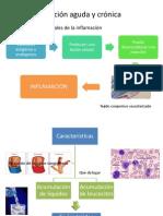 inflamacionagudaycronica-110604020932-phpapp01