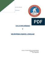 Neuro Lenguaje y Ritmo Circardiano