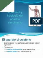 12 de Octuber Circulatorio Sangre y Linfatico
