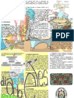 Triptico Pancreas Endocrino