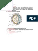 Etiopatogenia de Influenza Virus