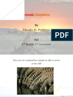 Animal Adaptation for 5th Grade