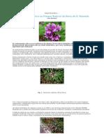 Estudo Etnobotânico S. Mamede