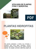 plantas_xerofitas[1][1]