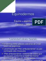 Aula 1 3 Bim Equinodermos