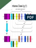 79664150 Imunologie Suport Curs Draft v 0 4 48
