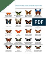 Coleccionista de Mariposas