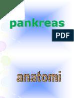 anatomi & histologi pankreas