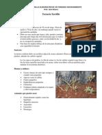 Instructivo para la elaboración de un Terrario - Microambiente