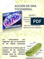 EXTRACCIÓN DE DNA MITOCONDRIAL modificada.pdf