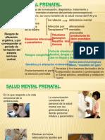 Exp de Salud Mental