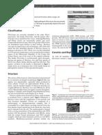 filoviruses.pdf