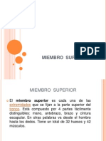 Anatomia Miembro Superior