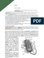 Guía célula y nutrición octavos