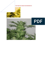 800 Strains With Pics