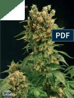 Cannabis Grow Tips From SoftSecrets2003-2006