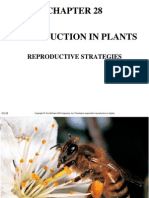 Chapter 28 Reproduction+in+Plant