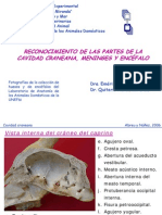 ENCEFALO-COMPARADA