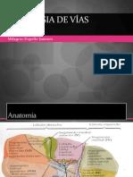 Neoplasia de vías biliares 2