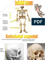 Sistemul osos1