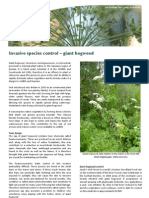 Invasive species control - giant hogweed