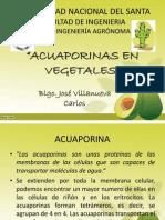 Acuaporinas Uns A