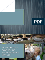 Patogenesis y Control Dde Enfermedades Virales