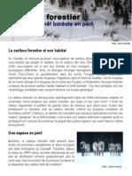 8 Caribou Forestier