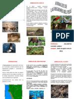Animales de Las Regiones Del Peru