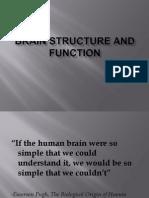 15 Lecture 8 Brain Structure Sl .1