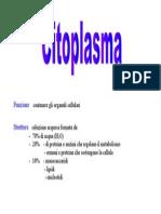 Cito Plasma